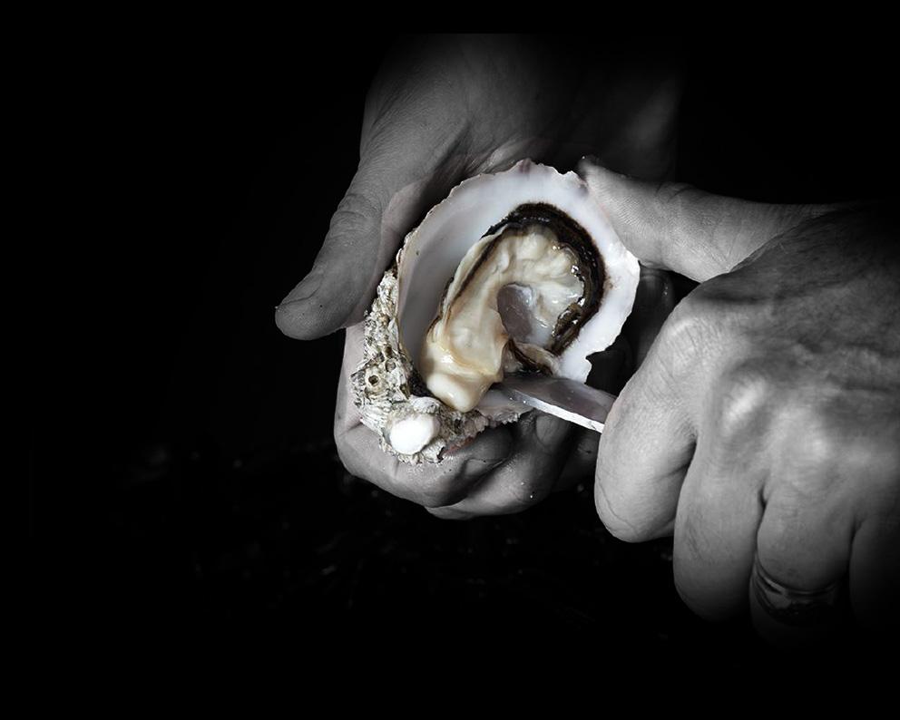 Ostra-Regal-huîtres-super-spéciales